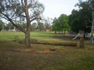 Photo of felled tree